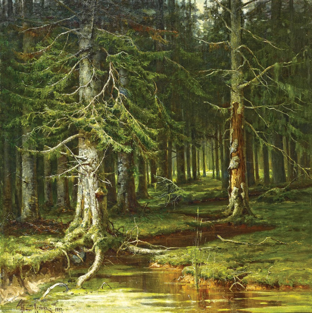 Девственный лес видео фото 779-864